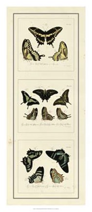 Framed Antique Butterfly Panel II Print