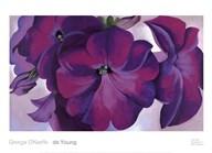 Petunias, 1925 Art