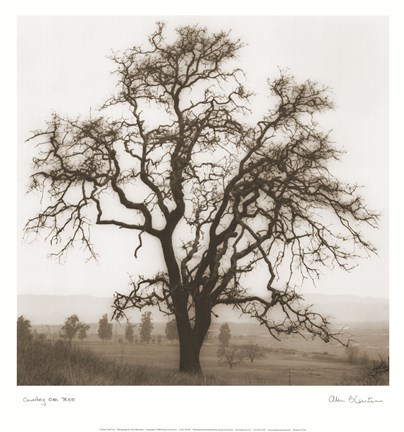 Framed Country Oak Tree Print