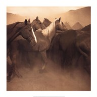 Remuda, Spanish Ranch  Fine Art Print