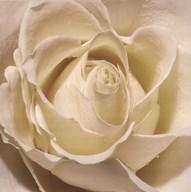 White Rose Art