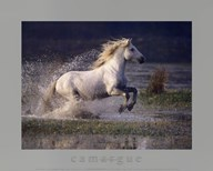 Aquatic Gallop  Fine Art Print