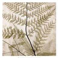 Ferns II