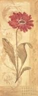 Evening Dahlia  Fine Art Print