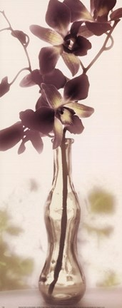 Framed Charming Orchid Print