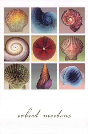 Framed Shell Collection Print