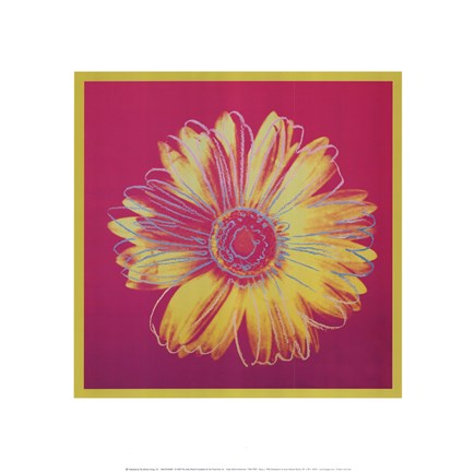 Framed Daisy, c.1982 (fuschia and yellow) Print