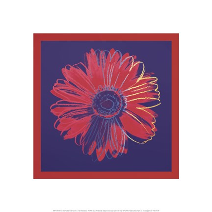Framed Daisy, c.1982 (blue and red) Print