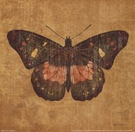 Ochre Butterfly Art