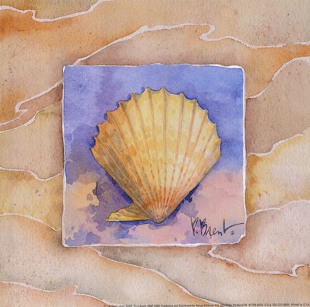 Framed Scallop - Mini Print