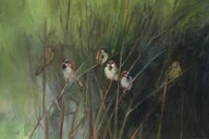 Summer Sparrows