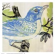 Bluebird  Fine Art Print