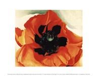 Poppy, 1927 Art