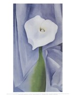 Calla Lily on Grey, 1928  Fine Art Print