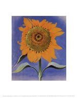 Sunflower, New Mexico, 1935  Fine Art Print