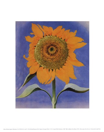 Framed Sunflower, New Mexico, 1935 Print