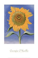 Sunflower, New Mexico, 1935 Art