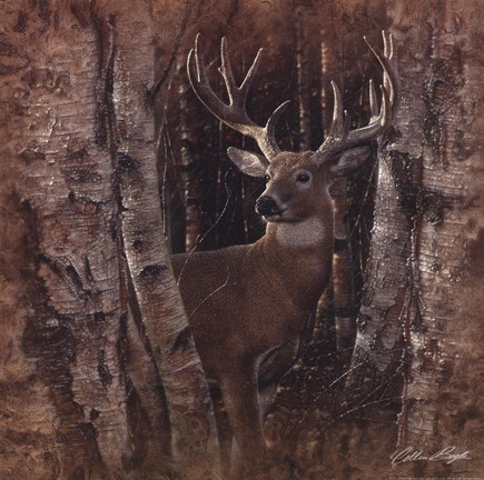 Framed Birchwood Buck Print
