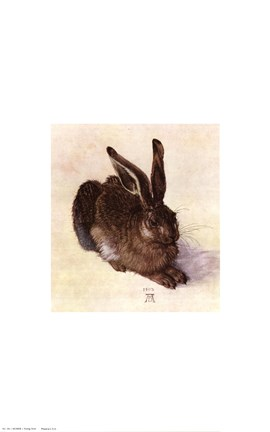 Young Hare, c.1502
