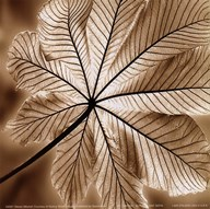 Autumn Leaf I Art