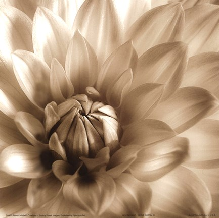 Framed Sepia Bloom III Print