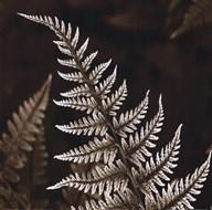 Heathers Feathers Art