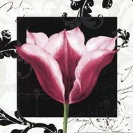 Damask Tulip III