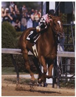 Affirmed 1978 Kentucky Derby #406 Color