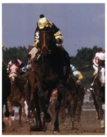 1977 Kentucky Derby Seattle Slew #816