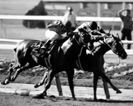 Affirmed 1978 Belmont Stakes #408 Black & White