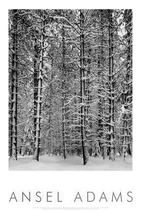 Framed Pine Forest in Snow (embossed) Print