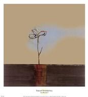 Zen Blossom I  Fine Art Print