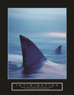 Intimidation - Sharks  Fine Art Print