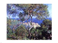 Bordighera, Trees  Fine Art Print