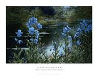 Blue Poppies  Fine Art Print