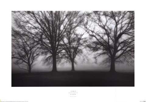 Framed Fog Tree Study IV Print