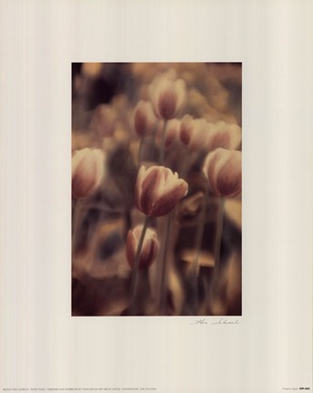 Framed Tinted Tulips I Print