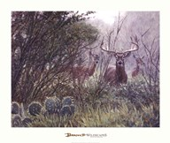 Lone Star Whitetail
