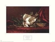 The Magnolia Flower  Fine Art Print