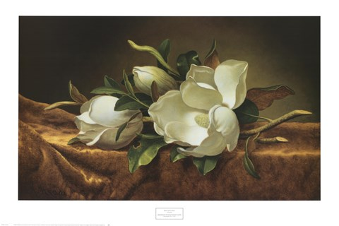 Magnolias On Gold Velvet Cloth Fine Art Print By Martin