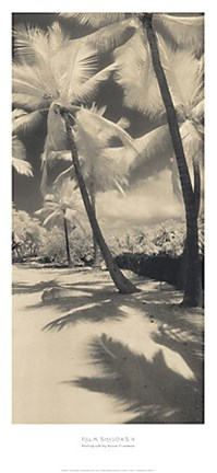 Framed Palm Shadows II Print