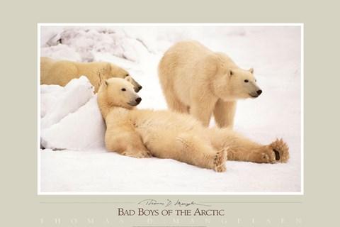 Bad Boys Of The Arctic Fine Art Print By Thomas Mangelsen