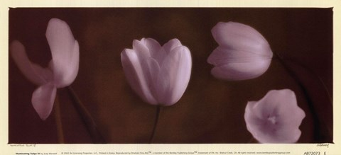 Framed Illuminating Tulips IV Print