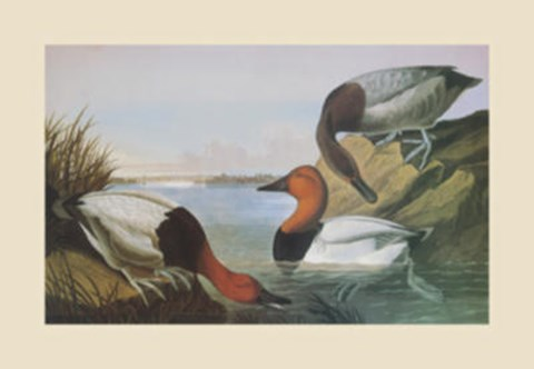 Framed Canvas Backed Duck Print