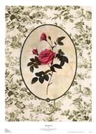 Toile Rose II  Fine Art Print
