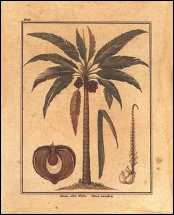 Framed Cocoa Nut Palm Print