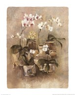 Arrangement of Orchids II-11x14  Fine Art Print