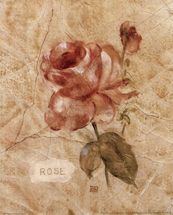 Rose on Cracked Linen