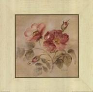 Burgundy Rose  Fine Art Print