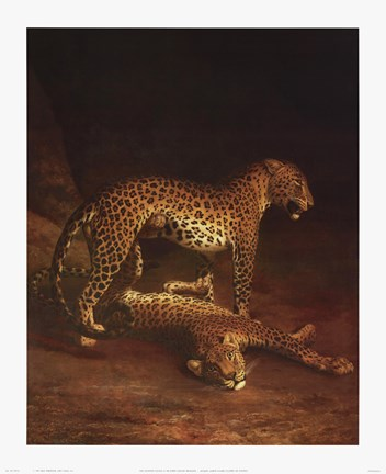 Framed Two Leopards Playing In The Exeter Chang Print